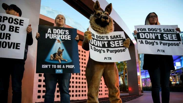 A Dog S Purpose Peta Video