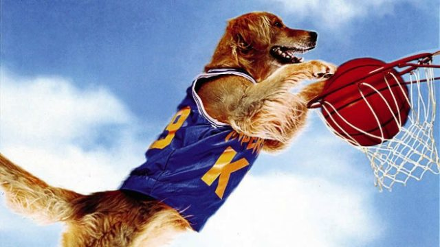 20 Things You Didnt Know About Play >> Celebrating Air Bud 20 Years Later 10 Things You Didn T Know