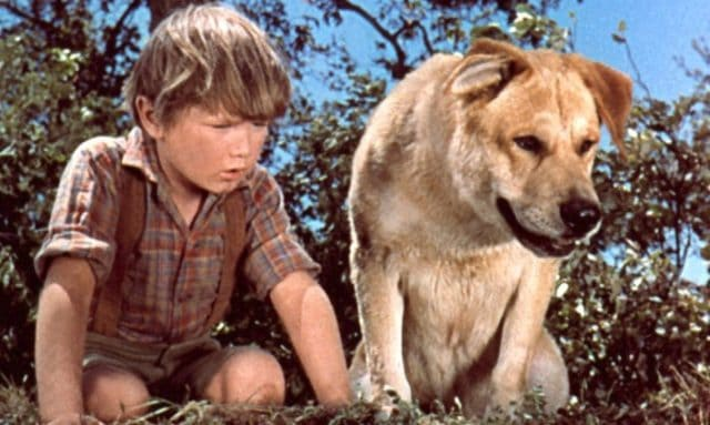Image result for old yeller